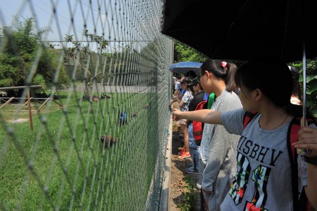 原来是在宝钢动物园,看那只孔雀在向你们问好呢!