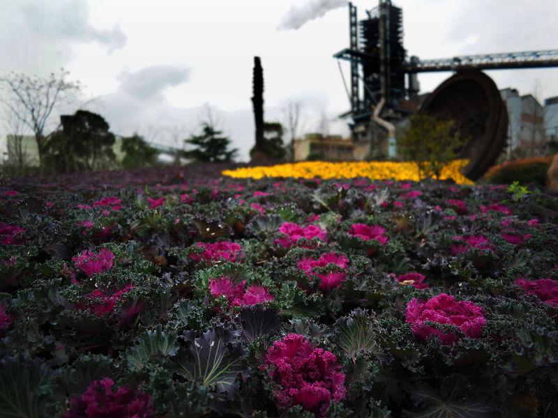 阳光下的花儿风景图片