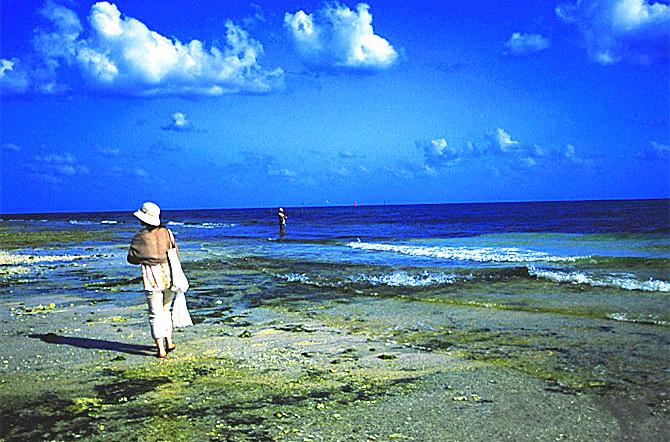 大海岛屿星星图片
